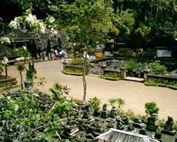 Goa Gajahi Bali
