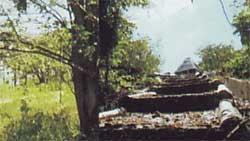 Hutan Kota (Jompie).