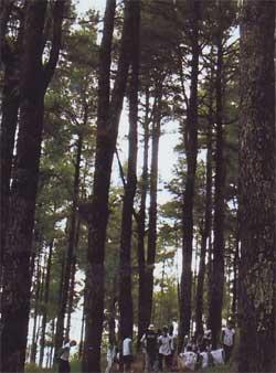 Hutan Wisata Malino.
